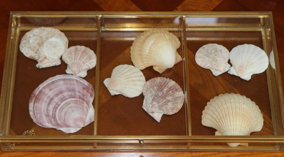 Decorating with seashells 9