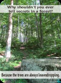 SecretsInForest