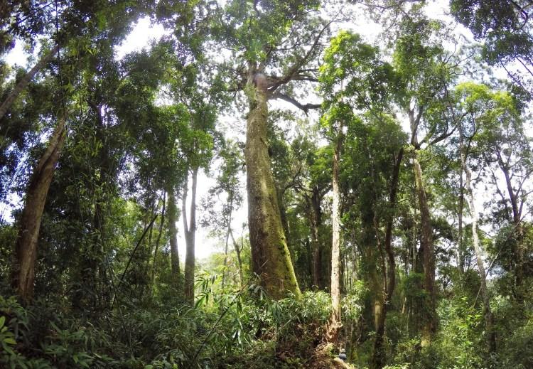 Đưa công nghệ vào rừng được coi là một bước đột phá trong công tác quản lý và bảo vệ rừng.(Ảnh: Vietnam+)