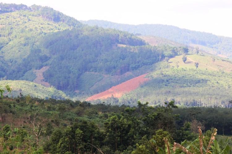 Khu rừng chi trả dịch vụ môi trường rừng. (Ảnh: Vietnam+)