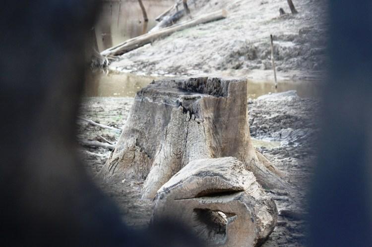 """Mỗi khi hồ thủy điện Khe Diên cạn nước, những gốc cây cổ thụ bị nhấn chìm dưới đáy lòng hộ lại """"hiện về tố cáo kẻ sát nhân."""" (Ảnh: Vietnam+)"""