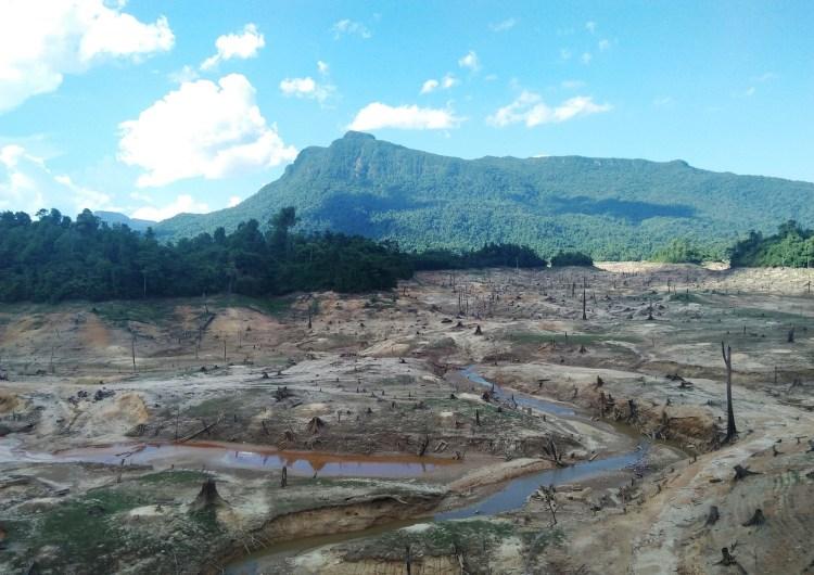 """Hàng ngàn cây cổ thụ bị đốn hạ như thể """"nghĩa địa rừng tự nhiên."""" (Ảnh: Hùng Võ/Vietnam+)"""