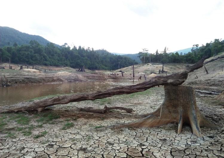 """""""Xác cây"""" nằm ngổn ngang dưới đáy lòng hồ thủy điện Khe Diên, tỉnh Quảng Nam. (Ảnh: Vietnam+)"""