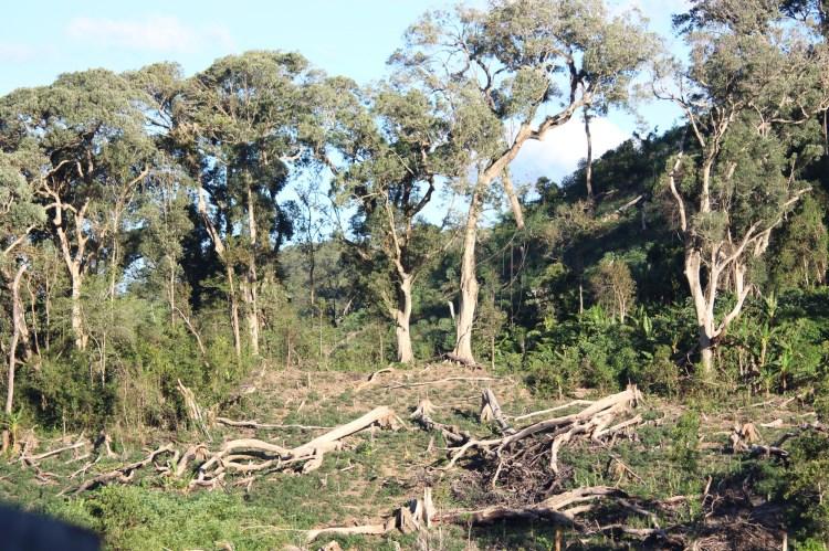 Mặc dù đã nhận tiền chính sách chi trả dịch vụ môi trường rừng, nhưng thay vì bảo vệ, chính cộng đồng lại đi phá rừng, khai thác gỗ trái phép. (Ảnh: Vietnam+)