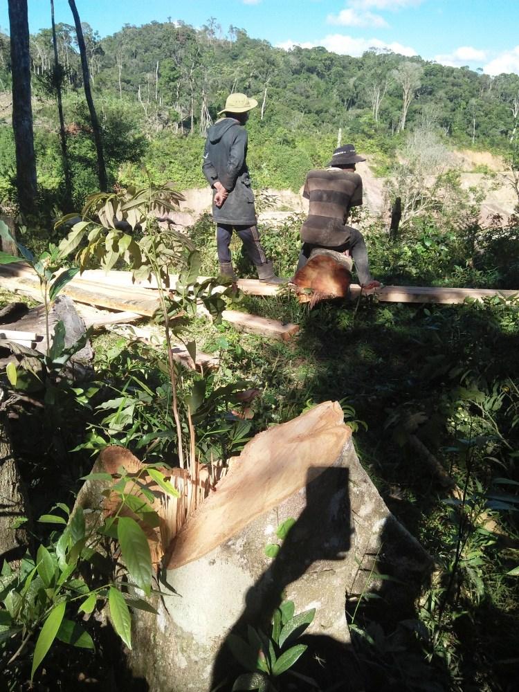Trớ trêu thực cảnh người nhận tiền chính sách chi trả dịch vụ môi trường rừng lại đi phá rừng, khai thác gỗ trái phép. (Ảnh: Vietnam+)
