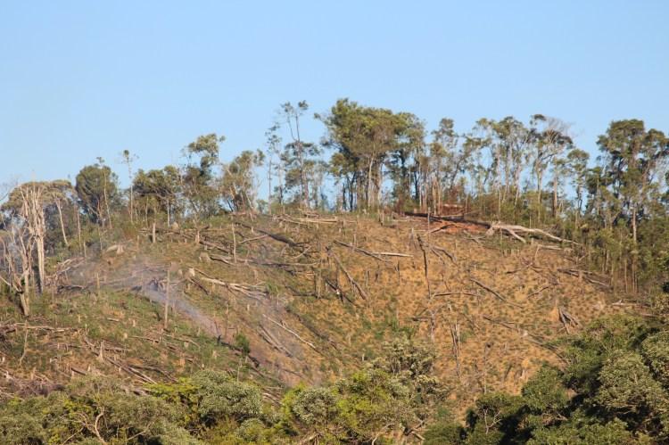 Một khu rừng tự nhiên bạt ngày cây cổ thụ ven quốc lộ 24 và đường Trường Sơn Đông bị người dân lấn chiếm, đốt cháy làm nương rẫy. (Ảnh: Vietnam+)