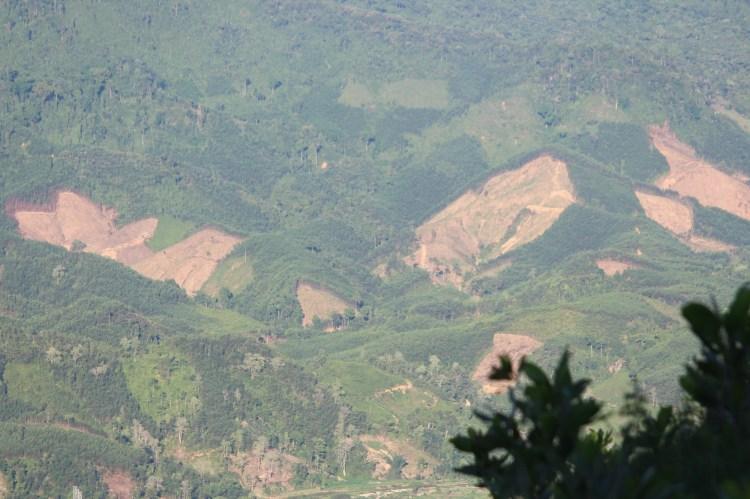 Thêm một cánh rừng bị người dân cạo trọc làm nương rẫy tại tỉnh Quảng Nam. (Ảnh: Vietnam+)