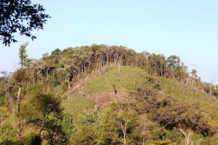Giáo sư,Tiến sĩ Bảo Huy, Đại học Tây Nguyên đề xuất nên có chính sách chi trả dịch vụ quản lý bảo vệ rừng với rừng nghèo kiệt. (Ảnh: Vietnam+)