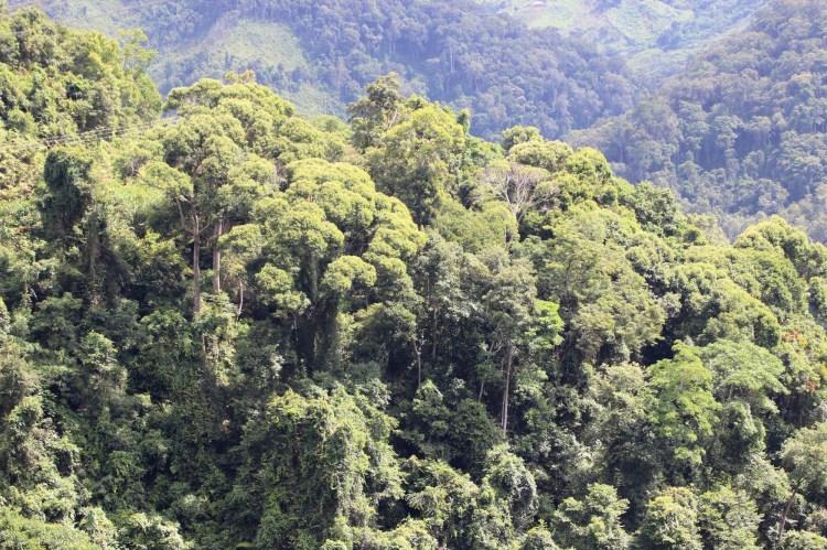 """Sau 13 năm triển khai, Luật Bảo vệ phát triển rừng 2014 đã thể hiện sự chồng chéo, trùng phủ nhau, đặc biệt là còn thiếu những chính sách có hiệu quả trong việc ngăn chặn, đẩy lùi tình trạng """"mất rừng theo kiểu mới"""" . (Ảnh: Hùng Võ/Vietnam+)"""