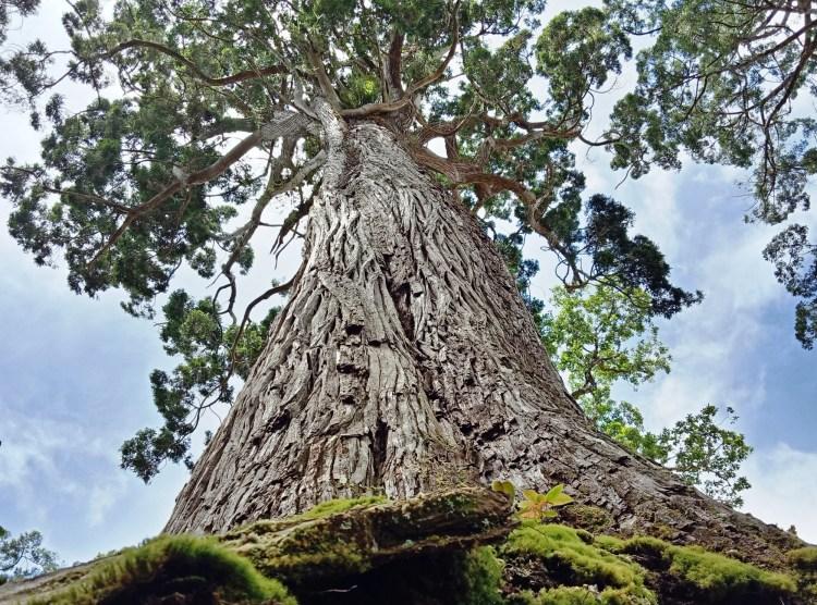 Hiện các giá trị của rừng đã bị khai thác tối đa để phục vụ nhu cầu phát triển kinh tế-xã hội của đất nước. (Vietnam+)