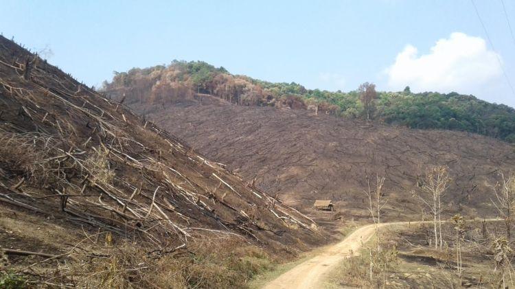 Nhiều nơi, rừng tự nhiên vẫn đang tiếp tục bị xâm lấn, đốt cháy để làm nương rẫy. (Ảnh: Vietnam+)