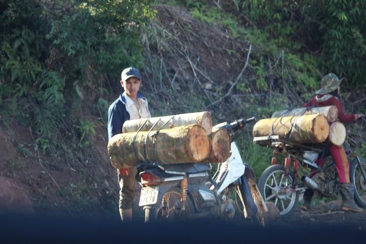 Một số đối tượng ngang nhiên vận chuyển gỗ ra khỏi rừng bằng xe máy chế độ và xe máy chuyên dùng. (Ảnh: Vietnam+)