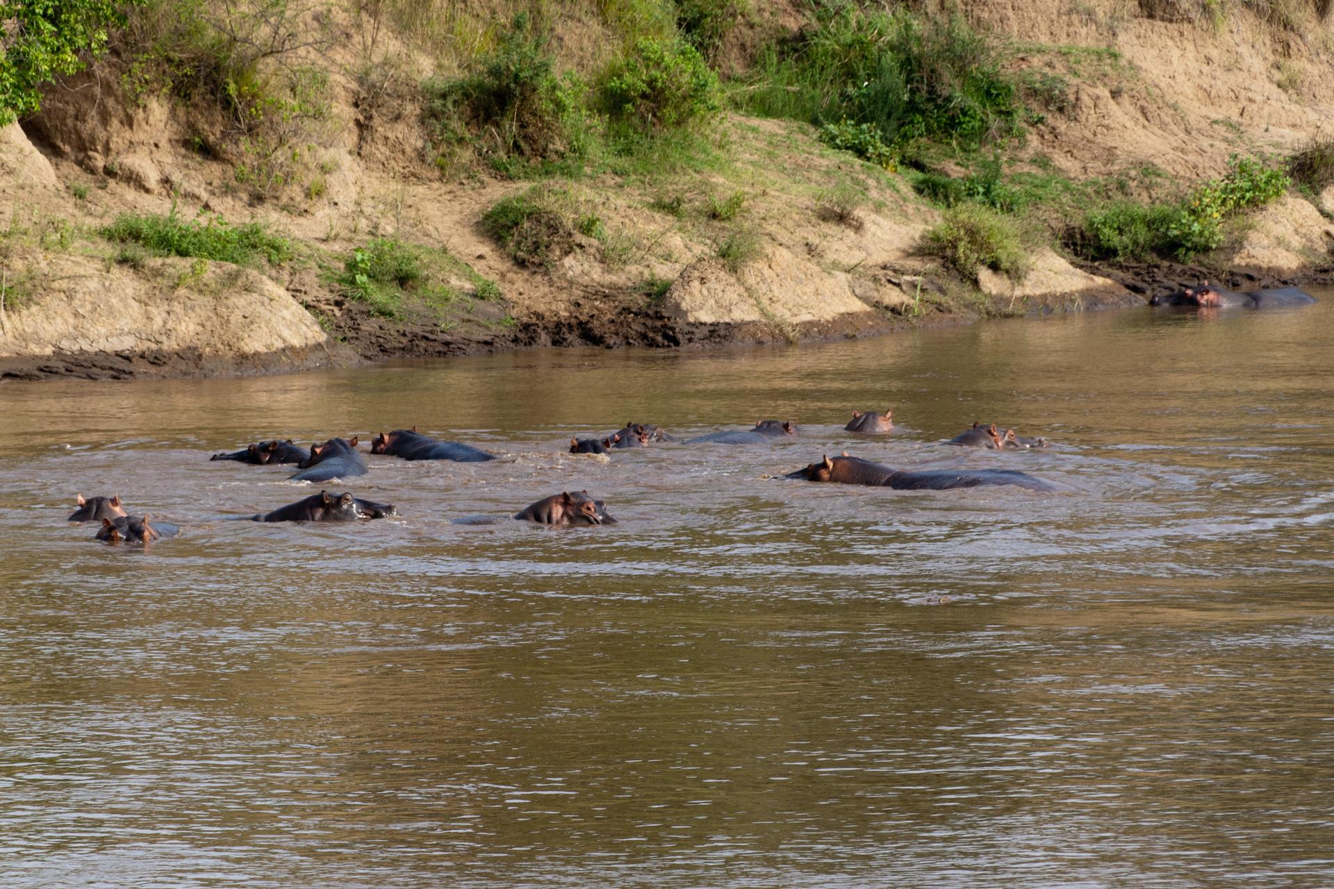 Safari w Kenii: Masai Mara
