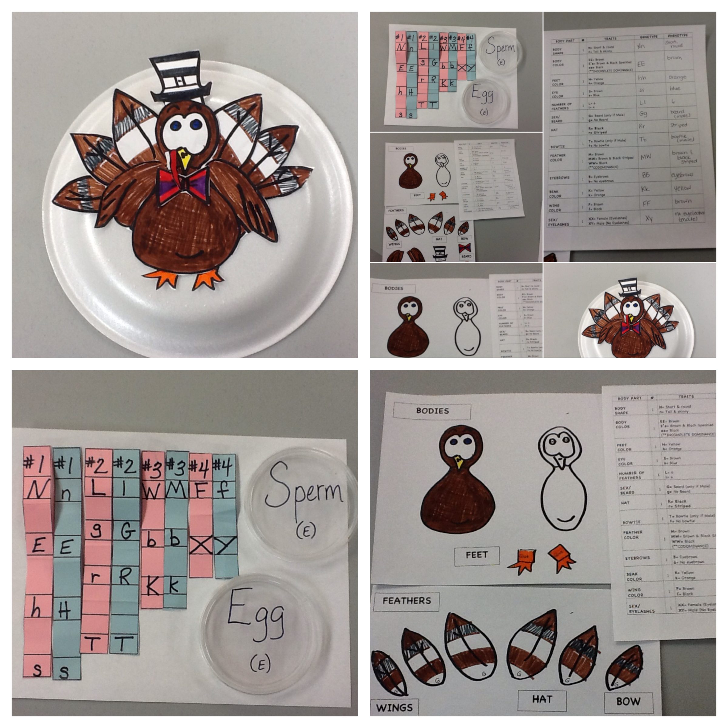 Thanksgiving Turkey Genetics Activity