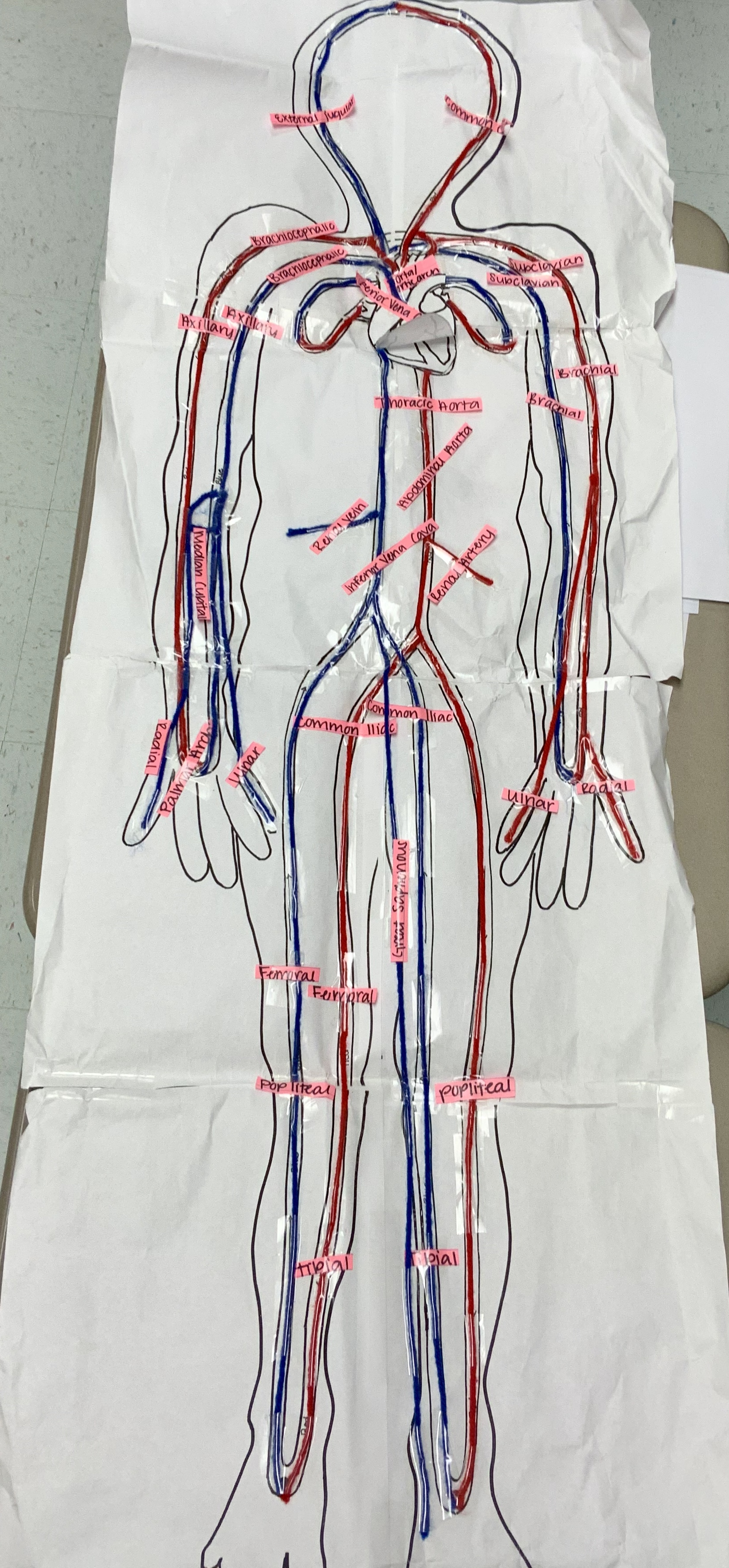 Anatomy Practicals Stackables That Teach A Life Sized