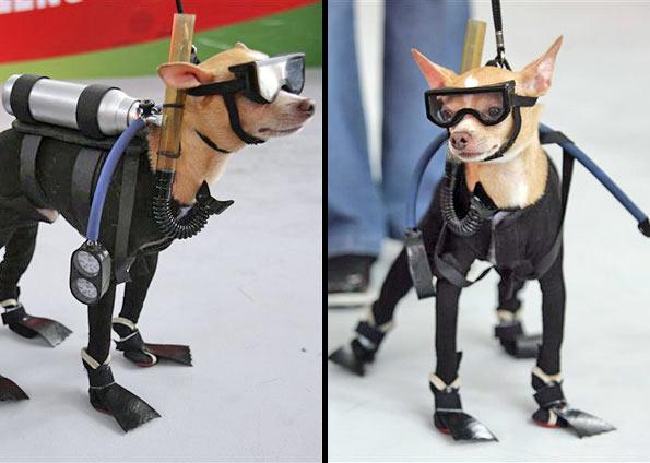 """Mondex - """"O cão mergulhador"""""""