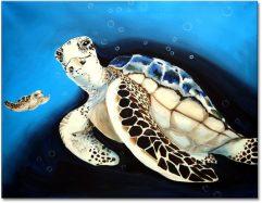 Schildkröte Art . Nr. 562