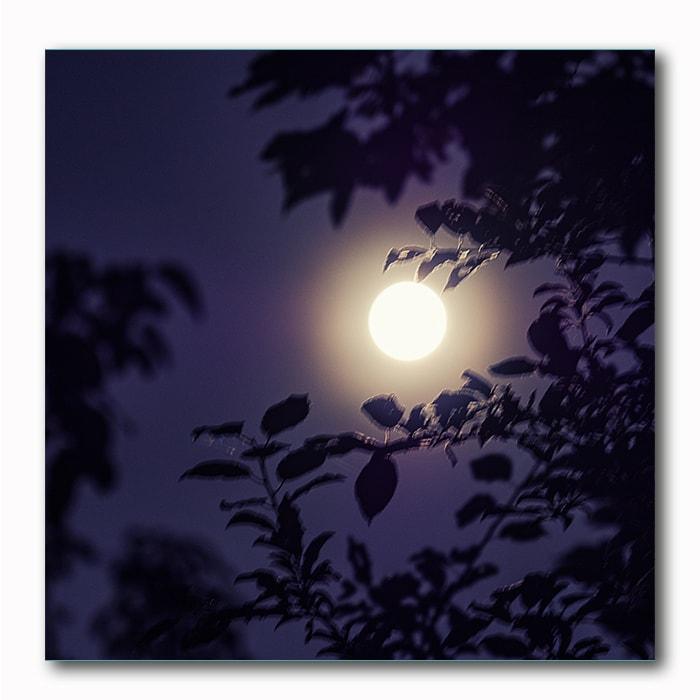 Vollmond Stimmung, Nachtblau, Bild auf Holz