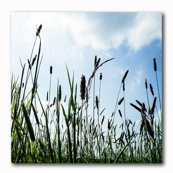 Natur Gräser Bild auf Holz