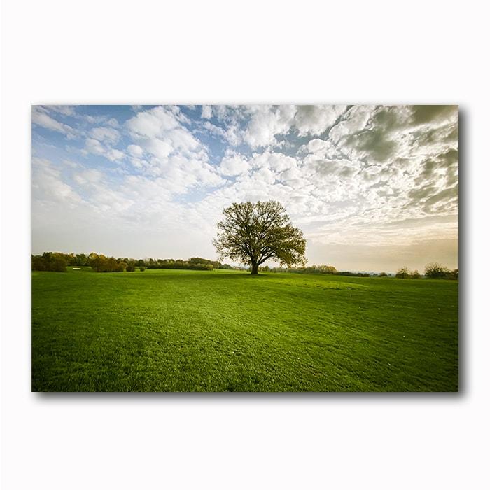Baum Hofhausen vor der Sonne