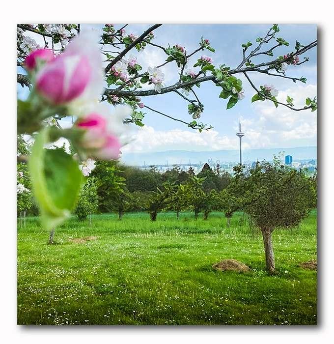 Blick auf Frankfurt, Skyline, Taunus, Bad Soden, Frühling, Bild auf Holz