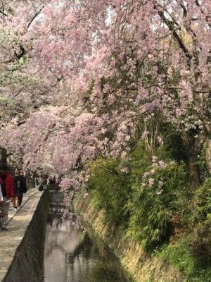 ようやく春です!!