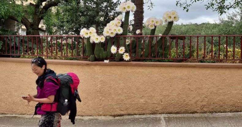 Camino スペインのサボテン