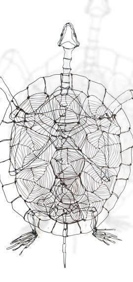 tortue - Odile Vailly
