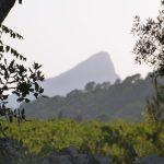 pic saint loup