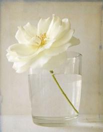 Fleur blanche dans un verre