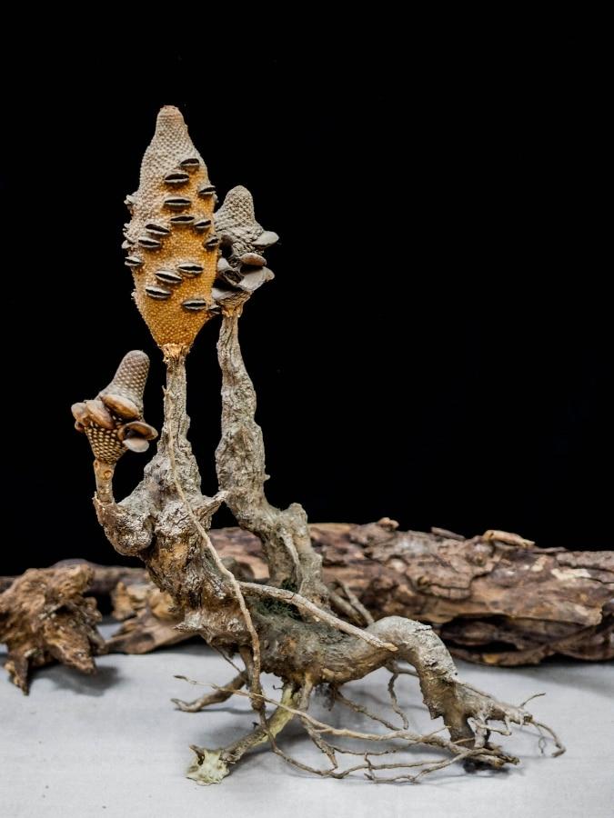 sculpture Véronique Mallaval - Agde