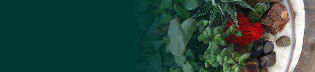 Creación y composición de terrariums con suculentas
