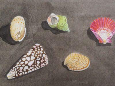 aquarel schelpen