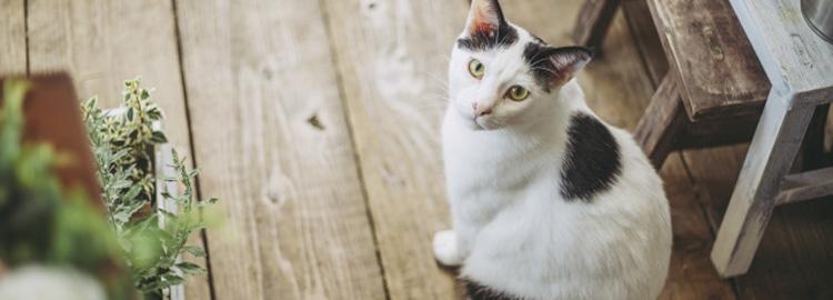 サロンに猫います