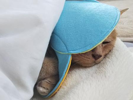 ちび猫 フェルトのカラー