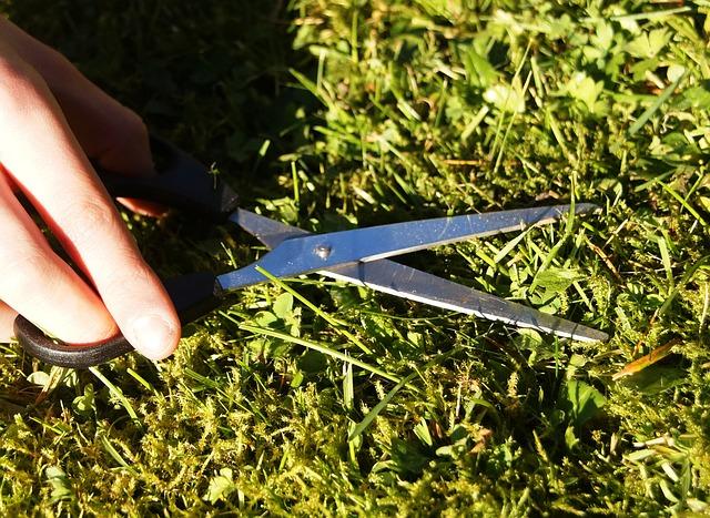 Tonte à l'arrêt : 4 raisons pour préserver la biodiversité post thumbnail image