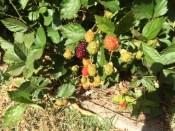 Next week's crop.