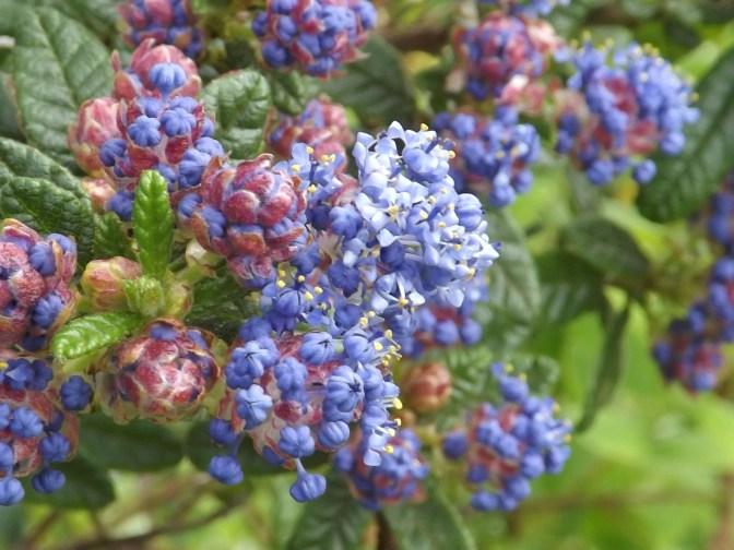Binley woods and gardens 019