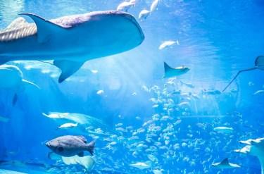 雨が多い秋のお出かけはこれで決まり♡全国人気の水族館5選