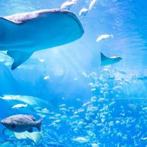 aquarium003