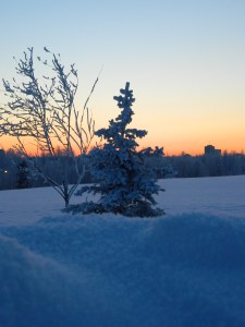 Hoar frost on trees in Anchorage in January 2012. Photo by Angela Gonzalez