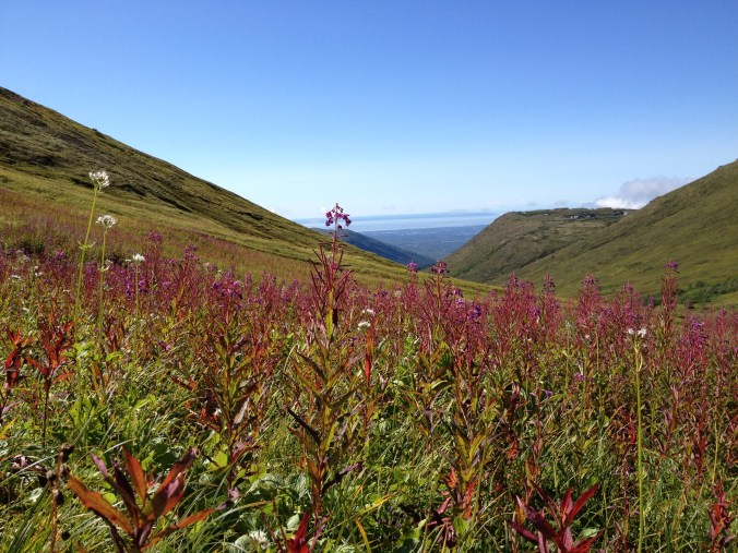Arctic Valley near Anchorage. Photo by Angela Gonzalez