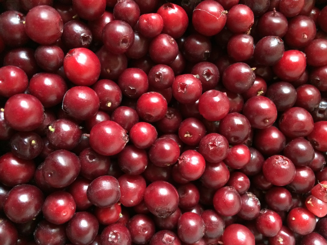 Cranberries picked in Huslia. Photo by Angela Gonzalez