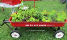 Red Wagon filled with herbs: chives, sage, and peppermint, and sedum.