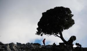 Trail mountain minthi 5