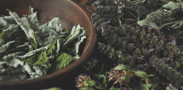 All you need to know about flying ointment