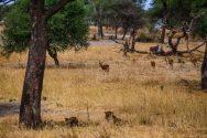 Safari Day 1-120
