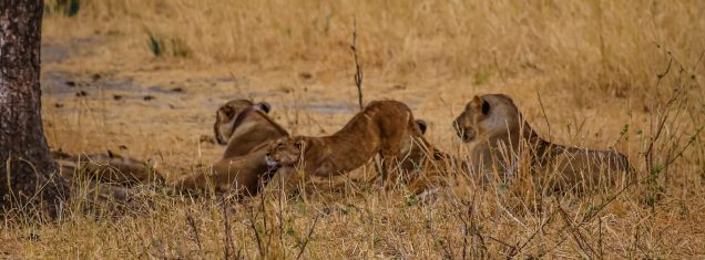 Safari Day 1-132