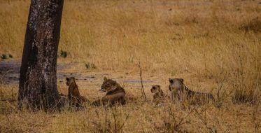 Safari Day 1-134