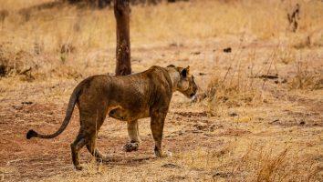 Safari Day 1-141